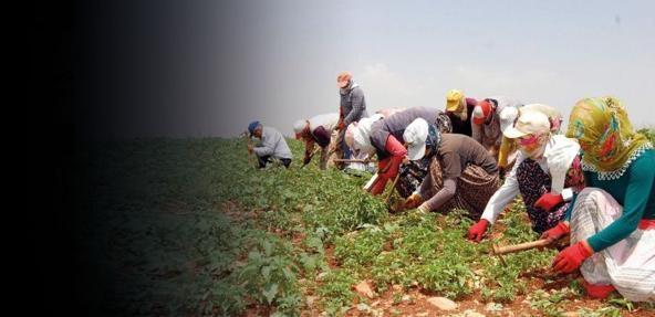 Türkiye tarımında milli çöküş… Hayati ürünler üretilmiyor!