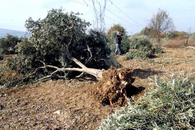 Parasını veren ağaç kesebilecek: Bakanlık 'cüzi' ceza ile doğa katliamının önünü açmak istiyor
