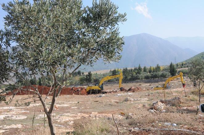 Ülkenin dört bir yanında ağaç katliamı: TOKİ İskenderun'da 6 bin zeytin ağacını kesmeye başladı