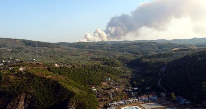Bursa'da yanan ormanlık alana 132 bin fidan dikildi