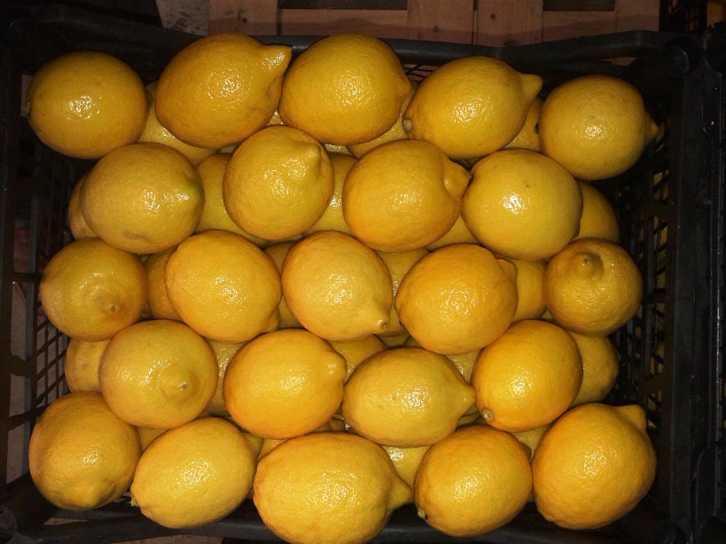 Temmuz ayında içinde zehirli madde olduğu için Yunanistan'dan ülkemize geri gönderilen 164 ton limon ne oldu?