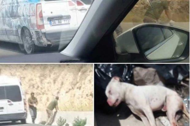 Barınak çalışanı: Hayvanlar talimatla katledildi