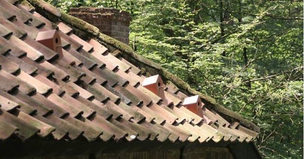 Çatılara kiremitinden kuşevi