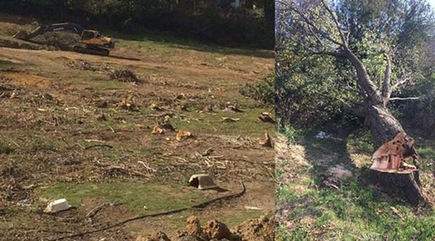 Kemerburgaz'da ağaç katliamına protesto