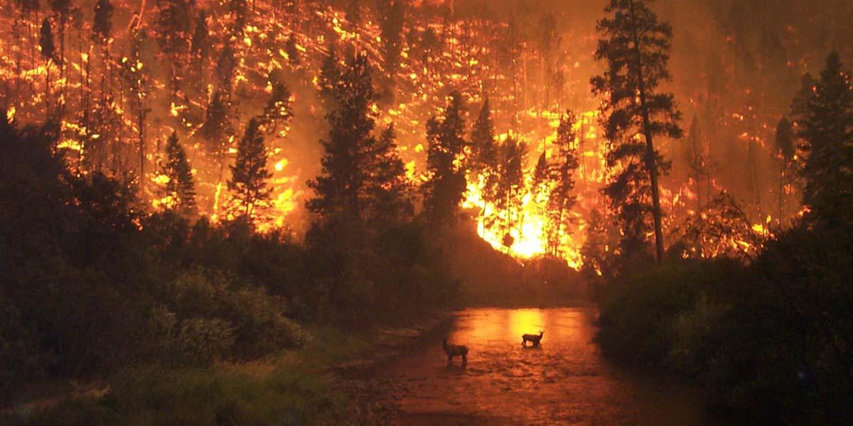 Taşa dönen coğrafyamız: Türkiye orman yangını bilançosu