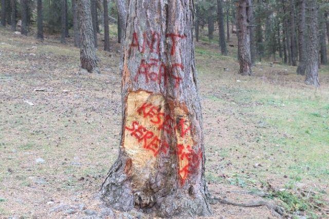 Ağaçlara yapılan tahribata tepki için ağaçlara yazılama yapmışlar