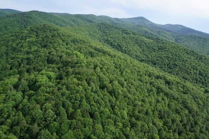 Kuzey Ormanları'na yeni darbe: Vize ve Çerkezköy-Silivri arasına iki termik santral!