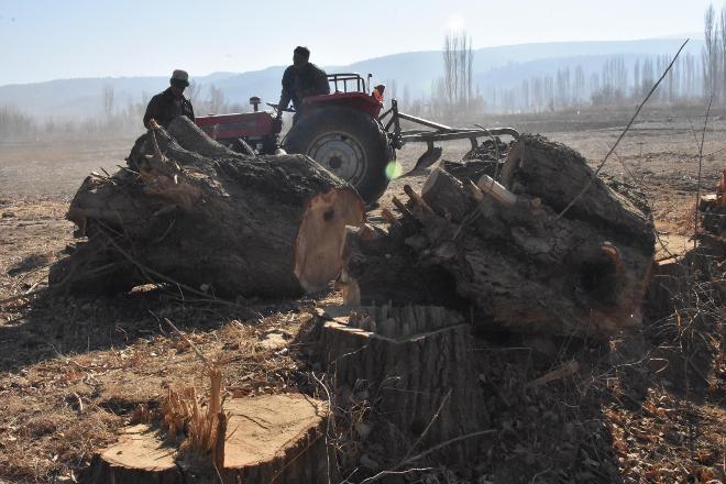 Konya'da 'arazi toplulaştırılması'nda yüzlerce ağaç katledildi