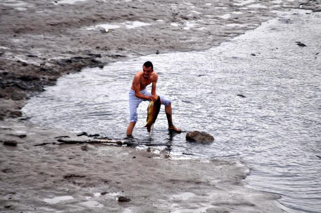 Çanakkale'de gölet kurudu, yüzlerce dev sazan balığı can verdi