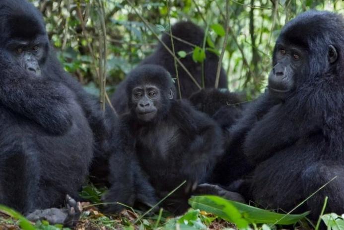 Nijerya Hükümeti dev bir otoyol yapmak için koruma altındaki ormanlarını yok etmeye hazırlanıyor