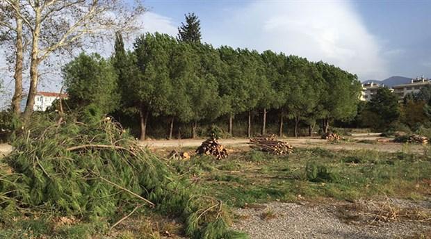 Yeşil Bursa'nın son ağaçları da gidiyor: Hastane inşaatı için 1100 ağaç kesiliyor