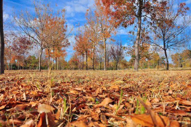 İzmir'de İnciraltı Kent Ormanı sonbahar renklerine büründü