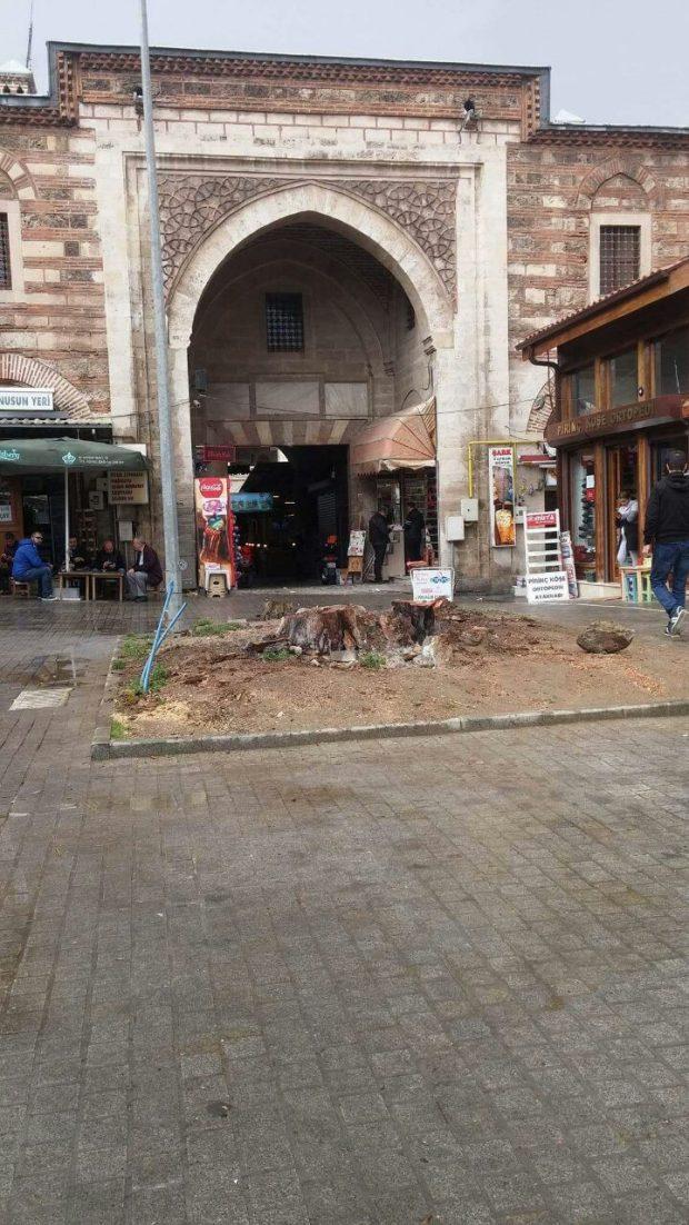 Bursa'da anıt ağaç gizlice kesildi, kökü yakıldı!