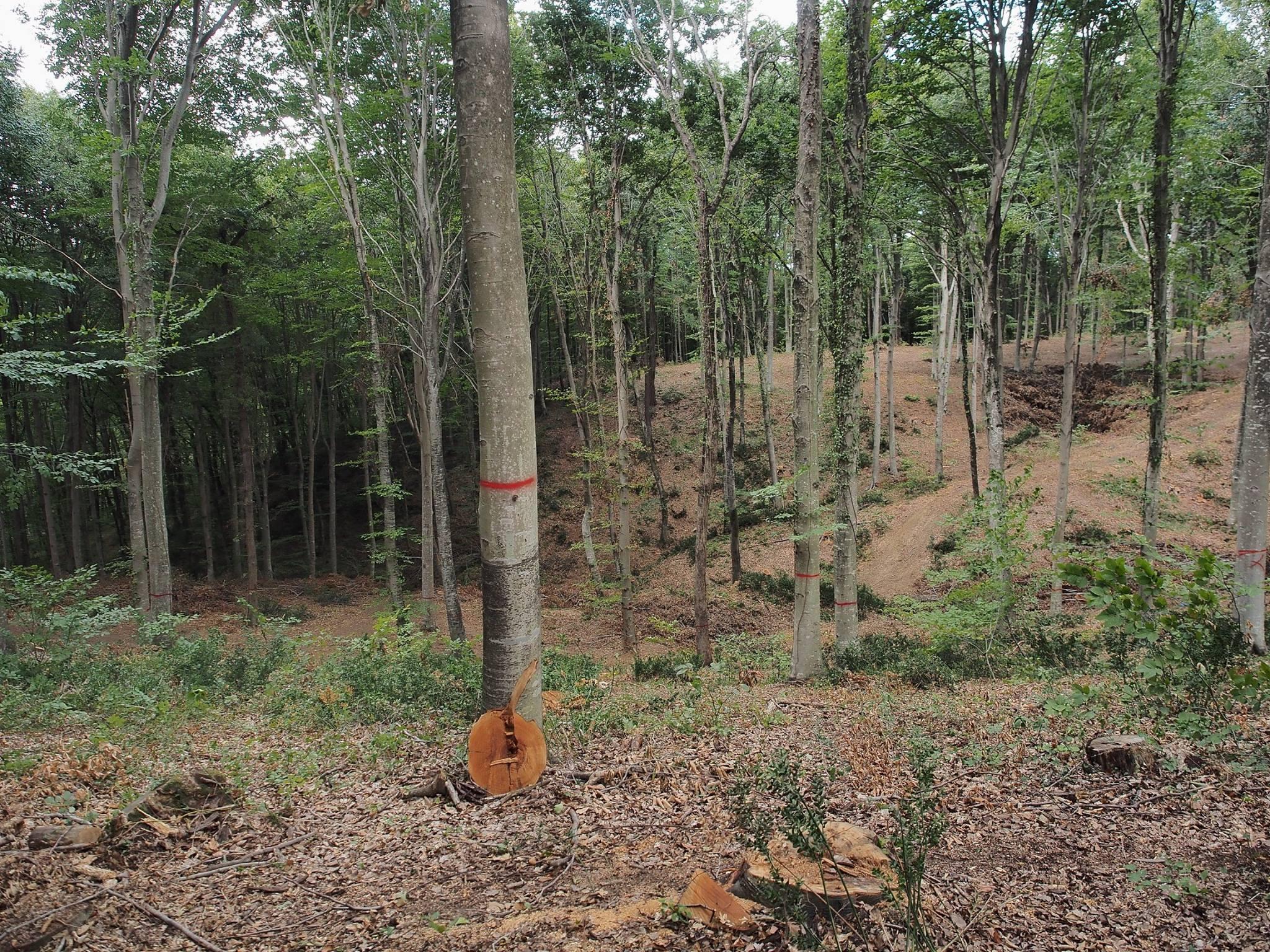 Betonkafalar Belgrad Ormanı'nda ağaçları işaretlemeye başladı!