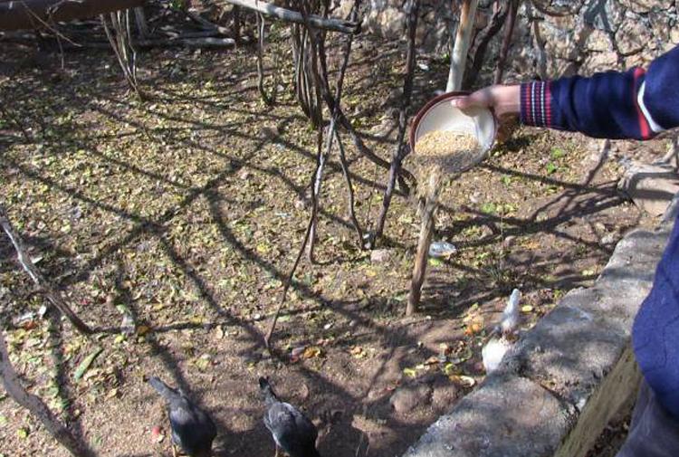 Kadınların komünü: İhtiyaçlarını market yerine doğadan karşılıyorlar