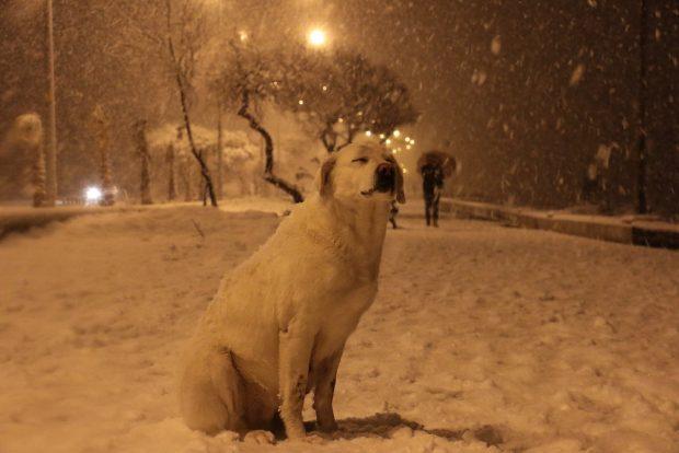Havalar soğudu, sokak hayvanlarını unutmayın