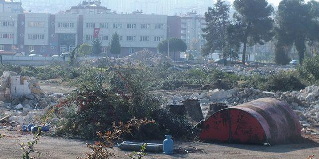 Ağaç önemli dedi ama ağaçlar katledildi