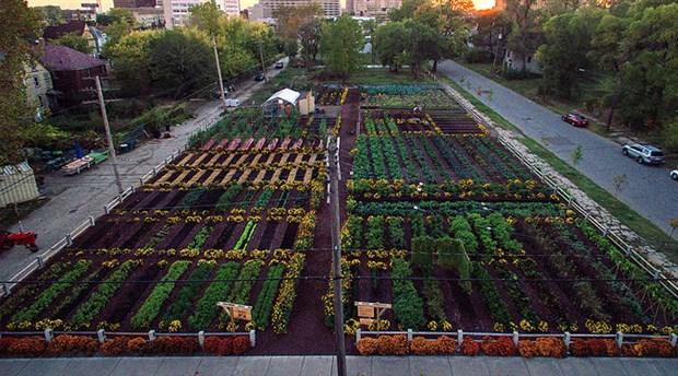 Detroit'te kentsel tarım