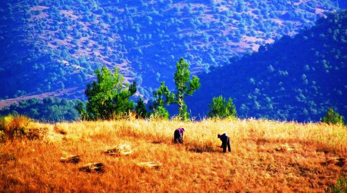 Antalyalı kadınların yerel tohum seferberliği