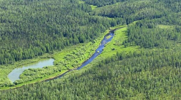 Orman alanlarının altında depolamaya izin