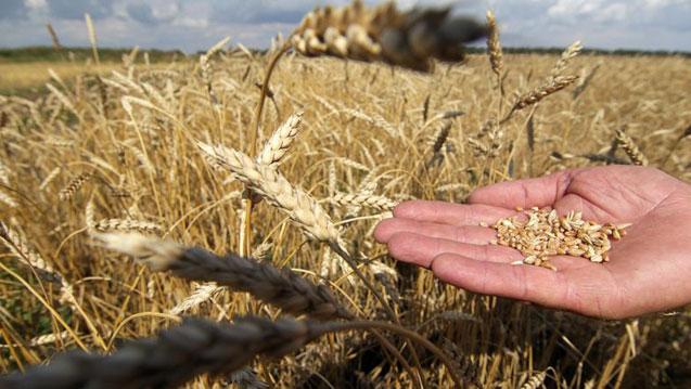 """""""Sertifikalı tohum biyoçeşitliliği azaltır, doyurur ama beslemez"""""""