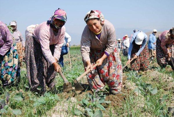 Hükümetin bütçesinden çiftçiye yoksulluk düştü
