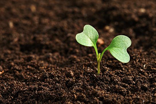 Milli Tarım Projesi ve tohumluk