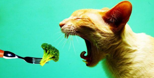 Hayvan Hakları ve Veganizm Açısından 2016 Yılı
