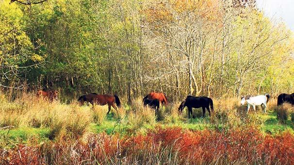 'Yarım asırlık yaban atları zarar görmesin'