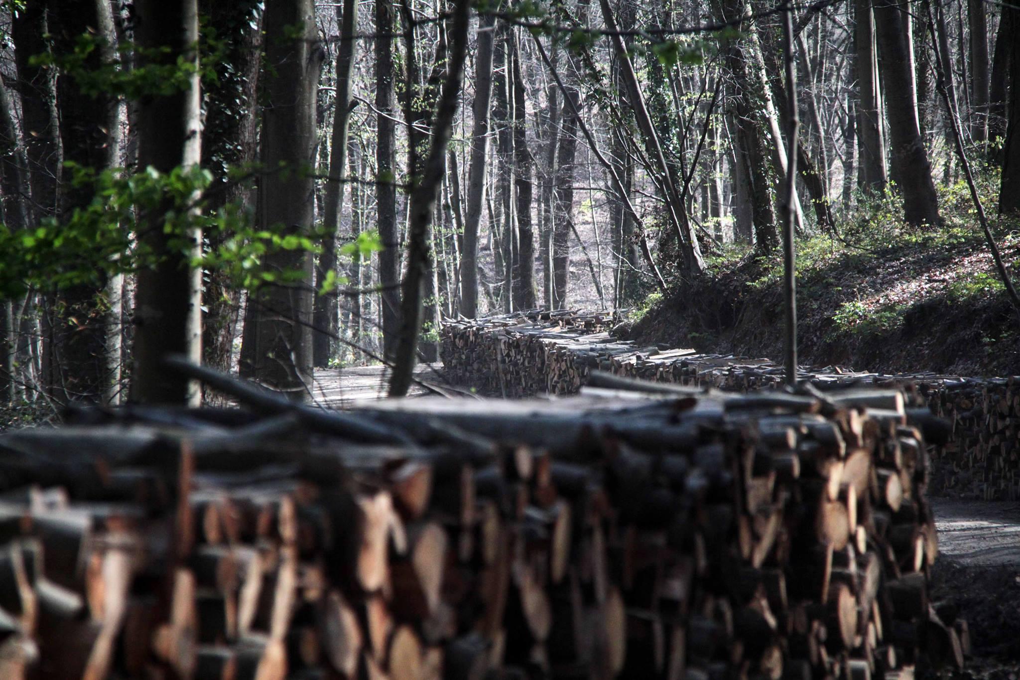 Melis Alphan: 'böyle böyle Belgrad Ormanı diye bir yer kalmayacak'