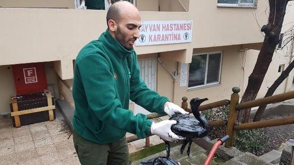 İzmit Körfezi'ne sızan petrole bulanan karabataklar tedavi altına alındı
