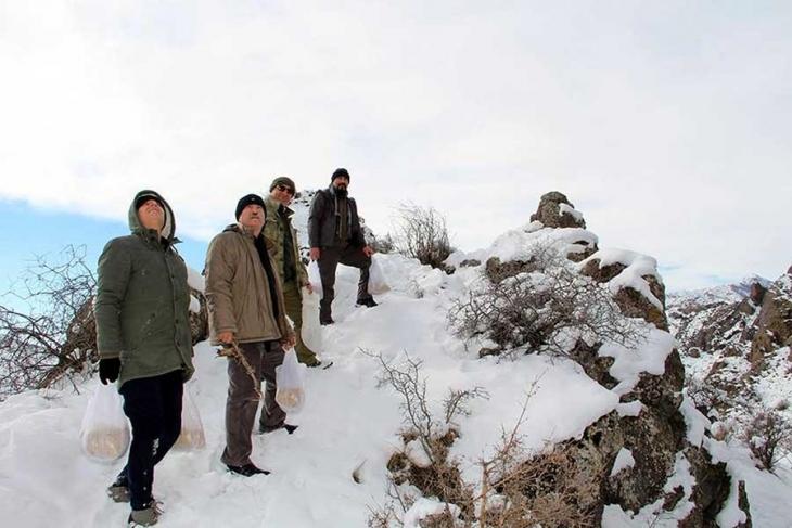 Erzurum'da ekip hasat ettikleri arpayı yaban hayat için serptiler