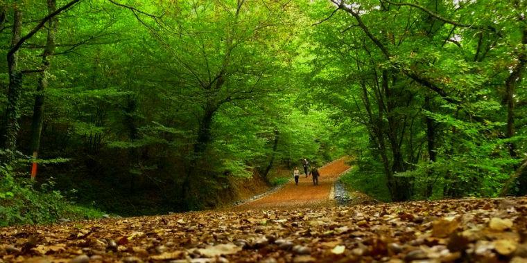 Kuzey Ormanları Savunması: Belgrad Ormanı'na yapılmaya çalışılan 'nostaljik tren hattı, Belgrad Ormanları'nın idam fermanıdır!
