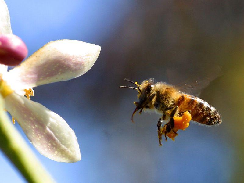 Aç kalmamak için arıları yaşatmalıyız!