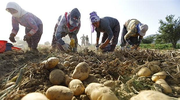 Çiftçilerin zor yılı: Çiftçi-Sen'e göre 2016'da tarımda iflas ilan edildi