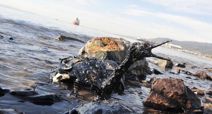 Körfezi kirleten şirketin ortağı eski bakan çıktı