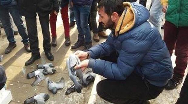"""""""Nasıl bu hale geldik?"""" dedirten acı olay: Kırıkkale'de güvercinler zehirli yemle öldürüldü"""