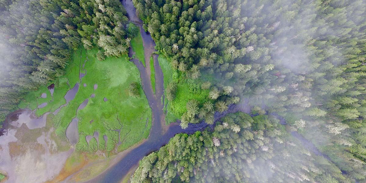 İlk halklar 13 bin yıl boyunca orman yetiştirmiş