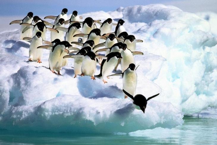 Şu penguen meselesi ve bir de yerli milli türlerimiz