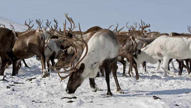 Kuzey Kutbu'nda neler oluyor?