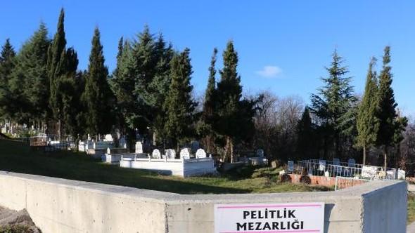 Ormanı parsel parsel satıp 'kaçak mezarlık' yapmışlar