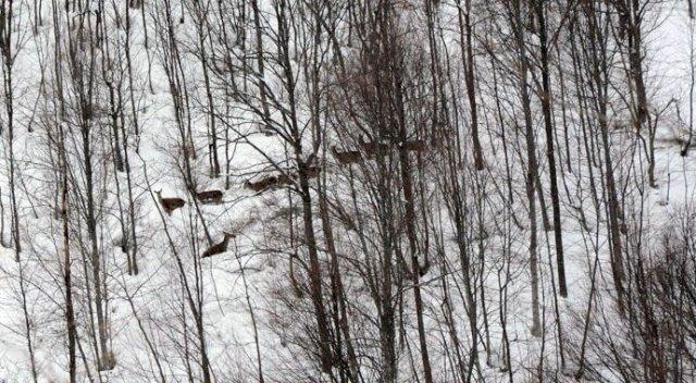 Kartepe'de aç kalmasınlar diye geyiklere yem bırakıldı