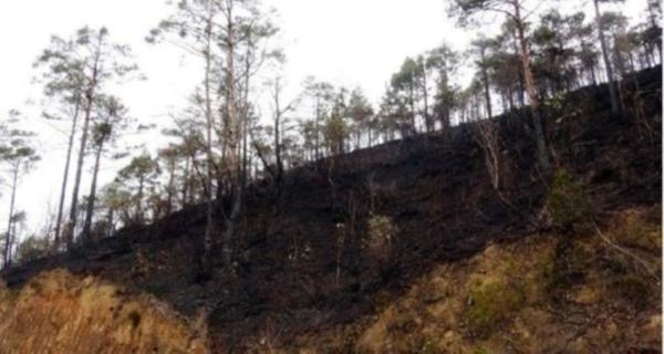 581 hektarlık ormanı yok eden AKP suçu lodosa attı