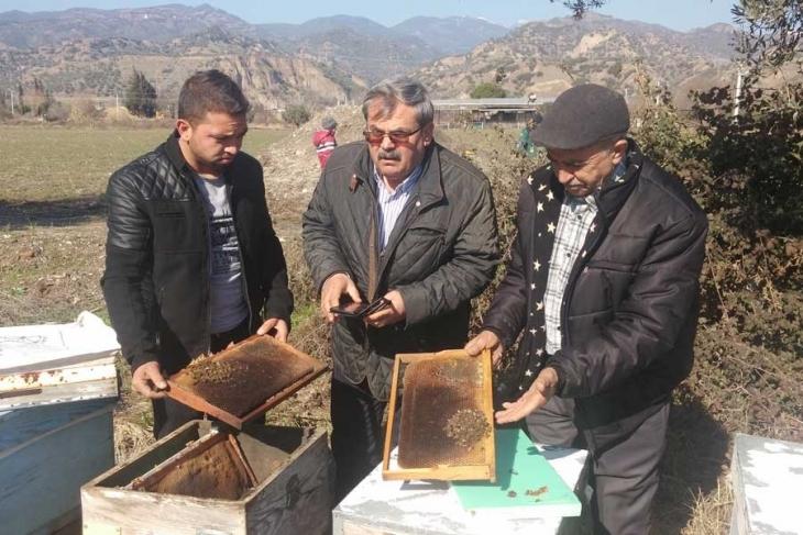 450 kovan arı, JES'lerin saldığı gazdan zehirlenerek öldü! Arı ölümleri devam edecek…