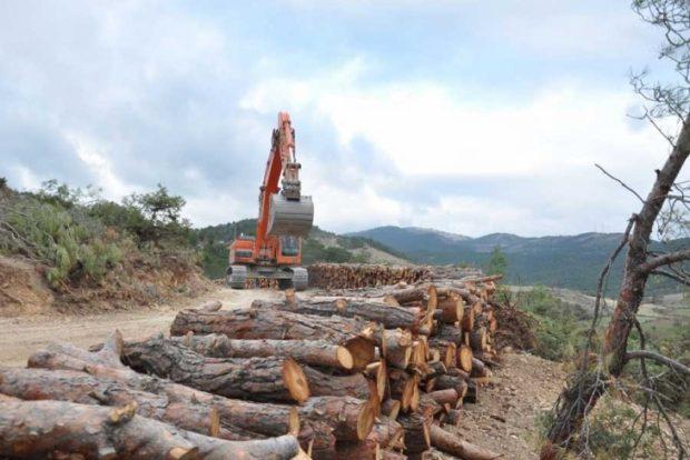 """Veysel, Binali'yi """"kandırmış"""", AKP döneminde ağaçlandırılan alan miktarı yılda % 9,6 azalmış"""