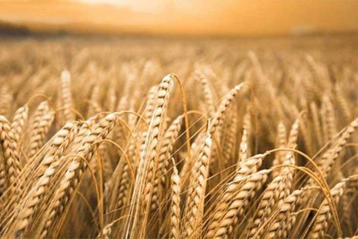 'Ekmeğe giren GDO'nun nedeni yanlış tarım politikaları'
