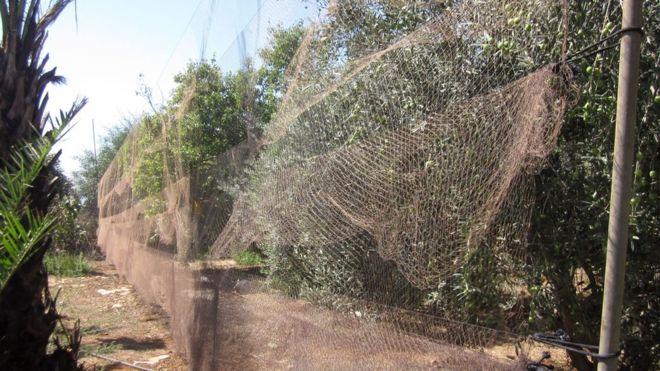 'Av çeteleri restoranlara satmak amacıyla Kıbrıs'taki İngiliz üssünde 800 bin kuş öldürdü'