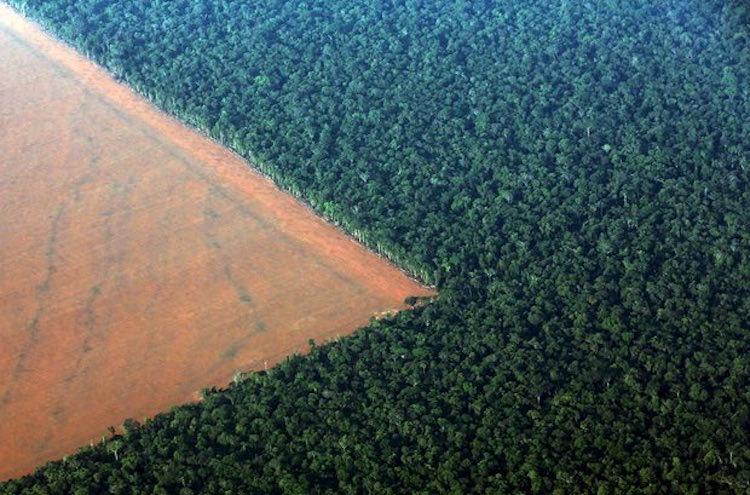 Burger King, et üretimi için Amazon ormanlarını yakıyor