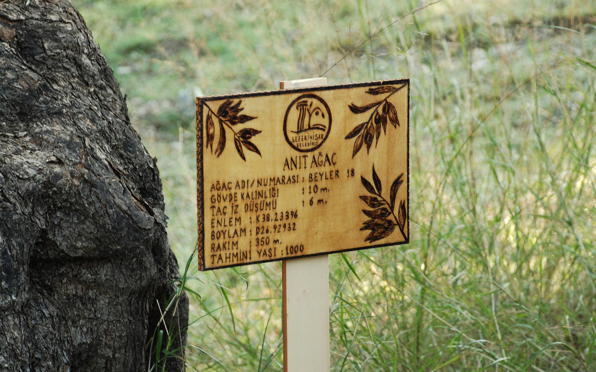Bir ağacı korumak