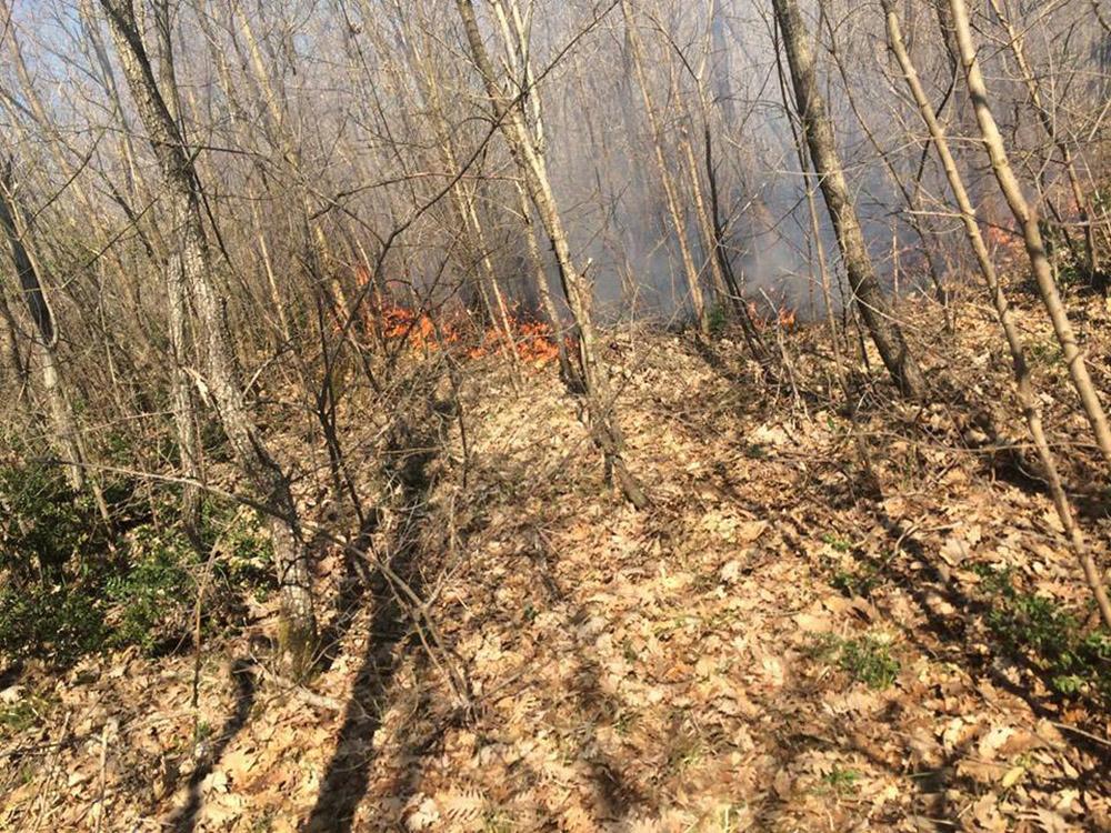 Saray Doğayı Koruma Derneği: ilçedeki orman yangınlarının sebebi bir an önce bulunsun